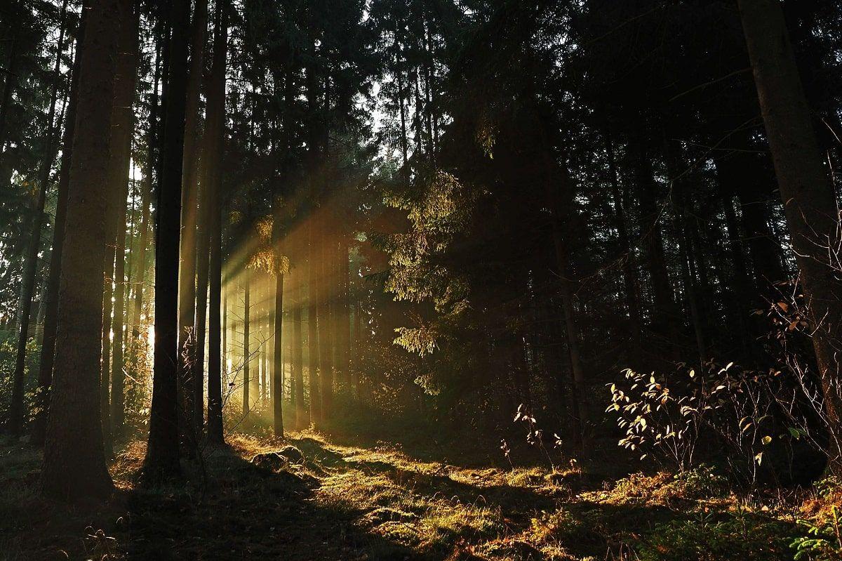 natural light through woods